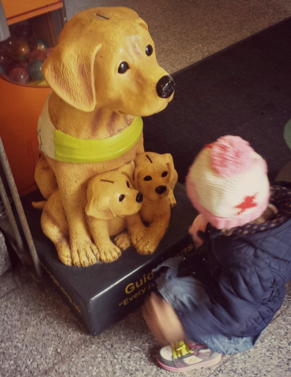 addison and the guide dogs