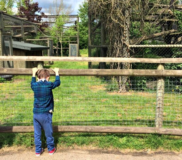 howletts zoo