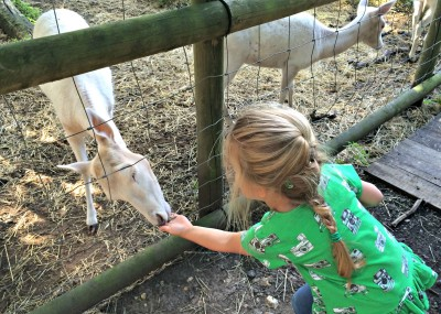 Addison feeding animals