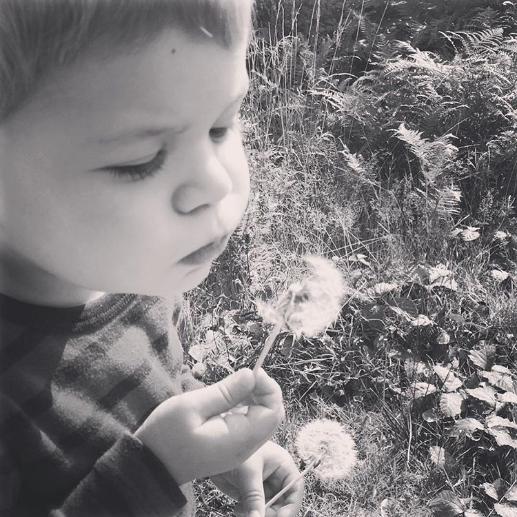 Someone blew his first Dandelion today milestone memories