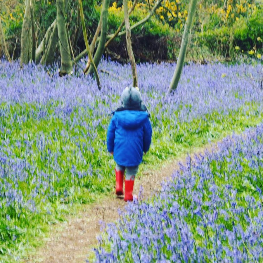 Love this shot of Deacon in the bluebells a couplehellip